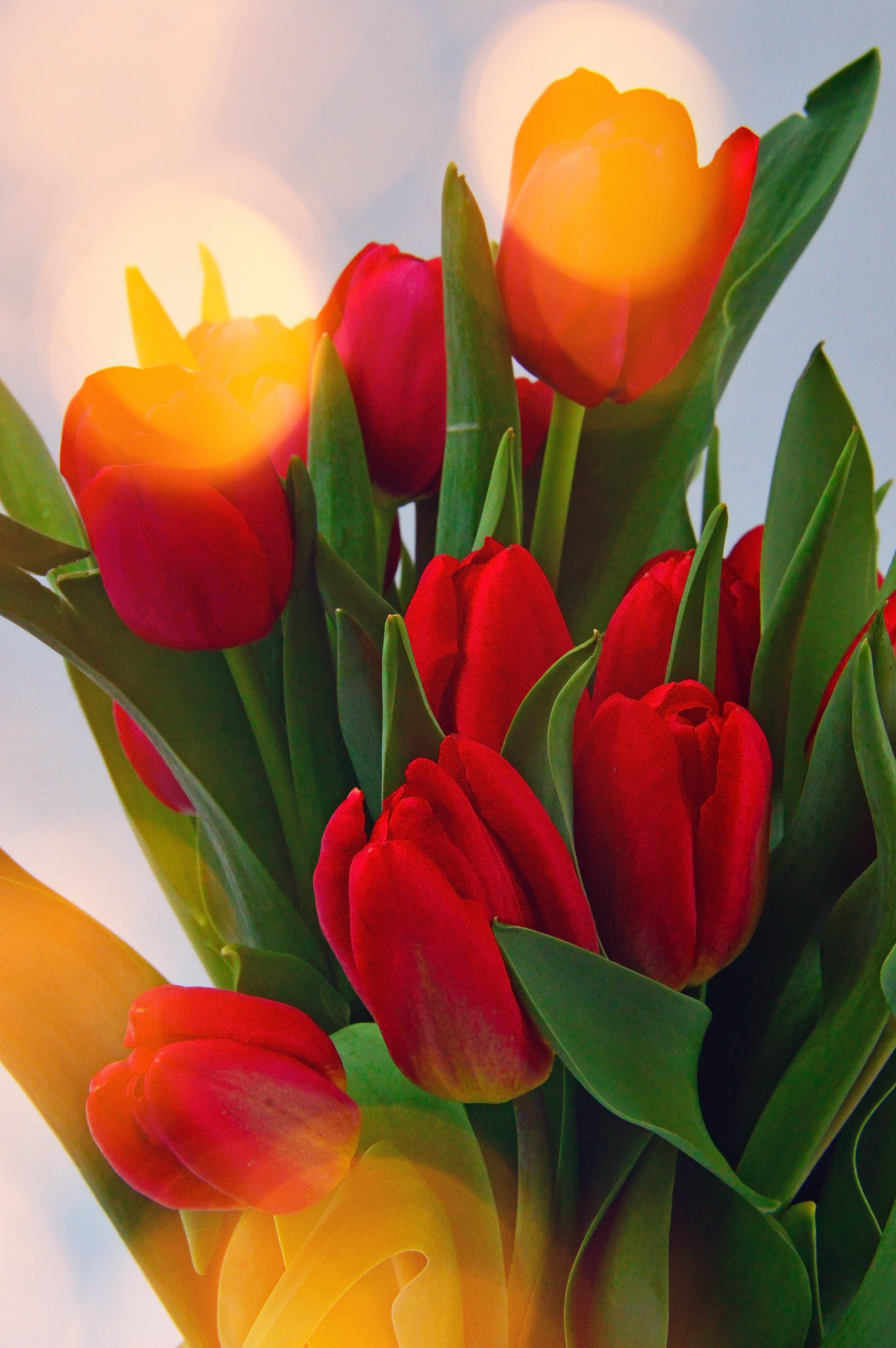 of background, beautiful, beauty, blossom