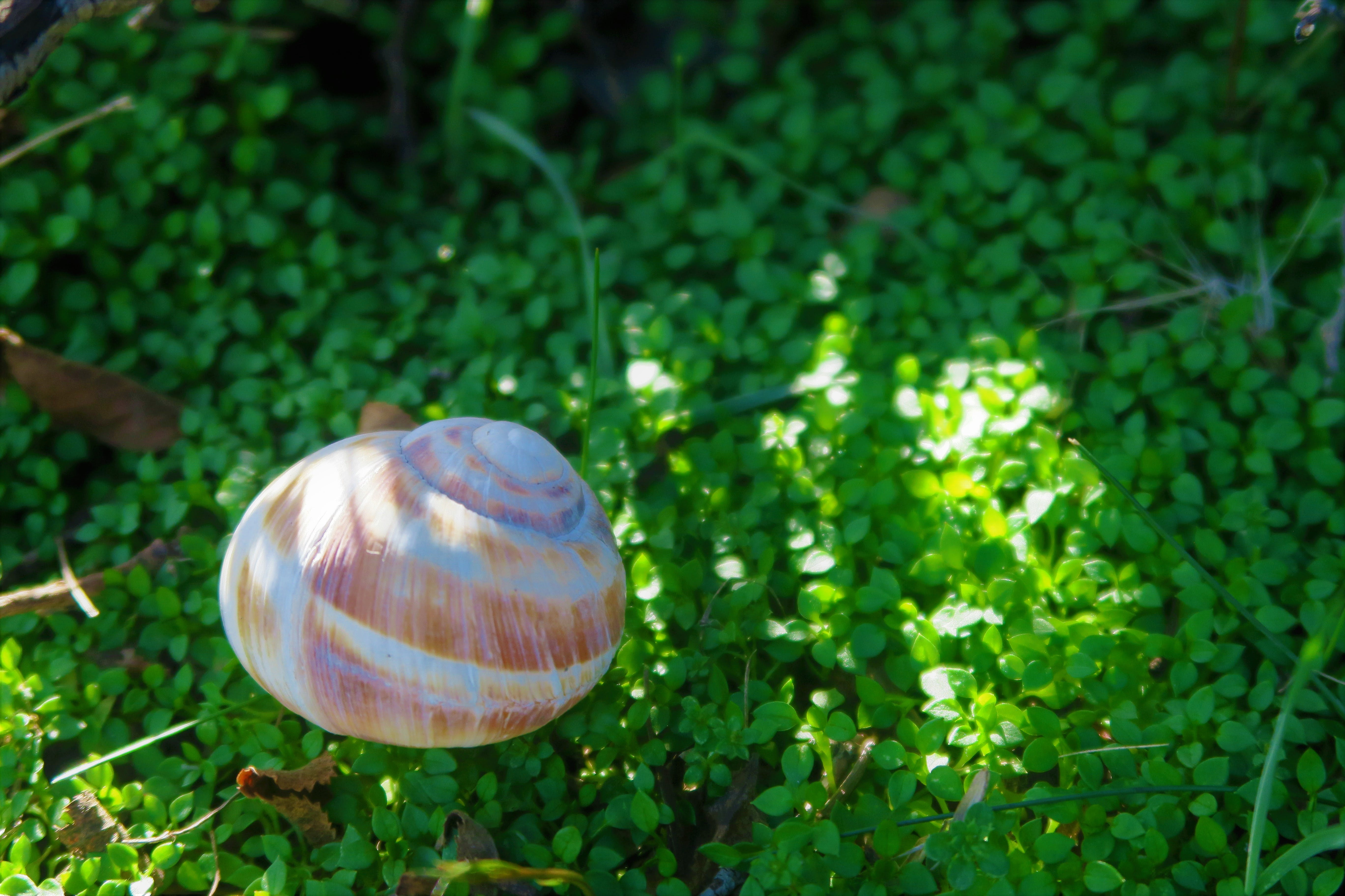 Free stock photo of nature, plant, scallop shell, spring