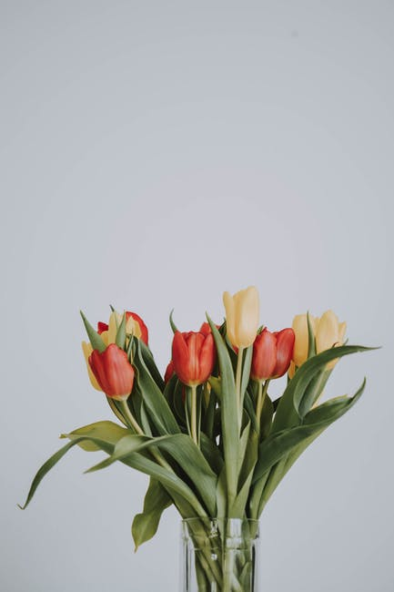 Red and yellow tulips on glass vase