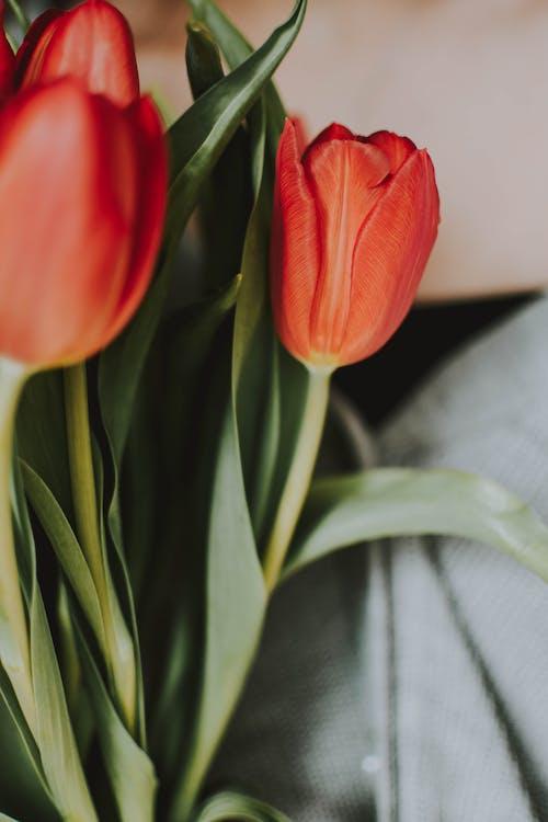女性, 花, 花束, 赤の無料の写真素材