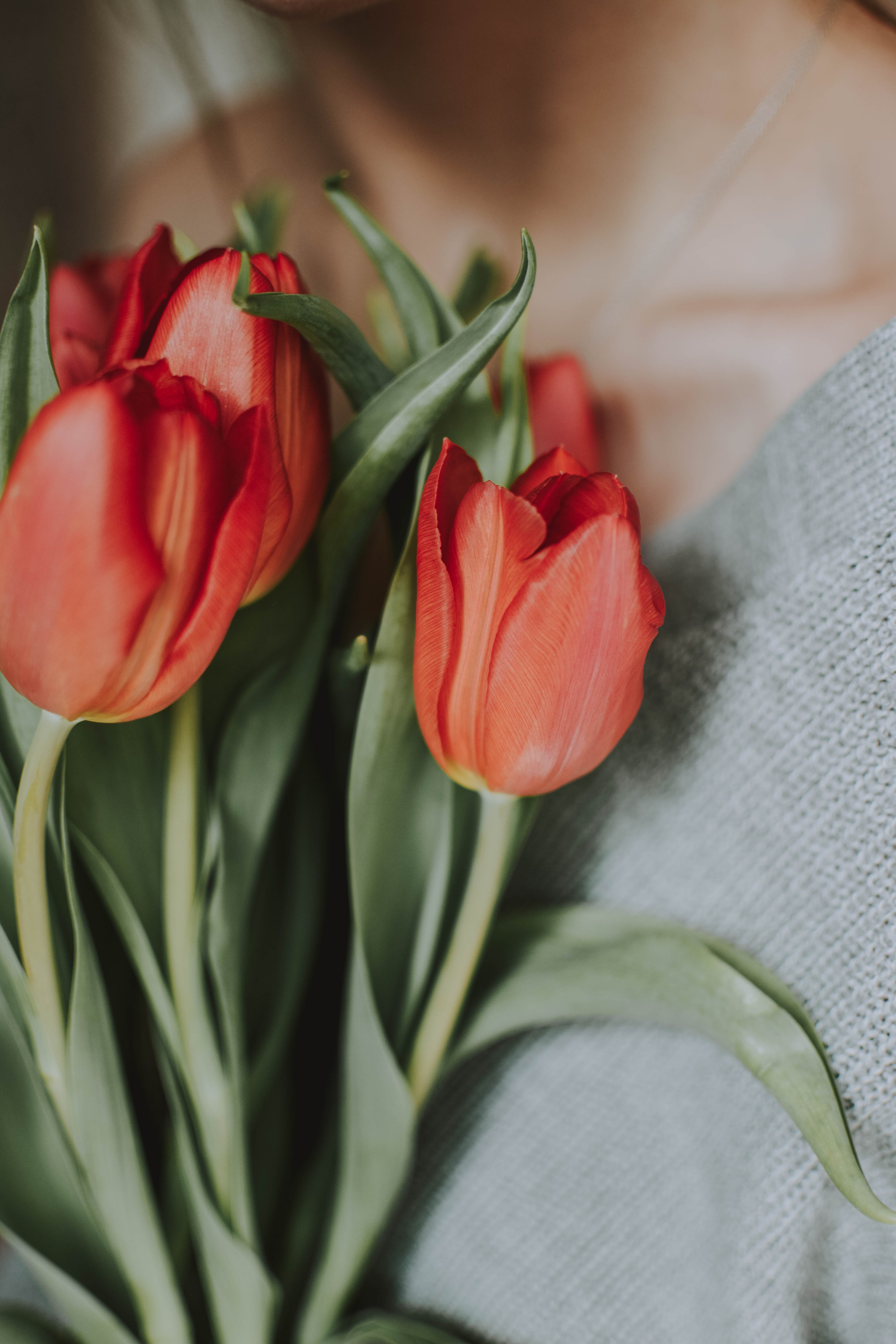 Close-Up Photo of Person Holding Red Tulips