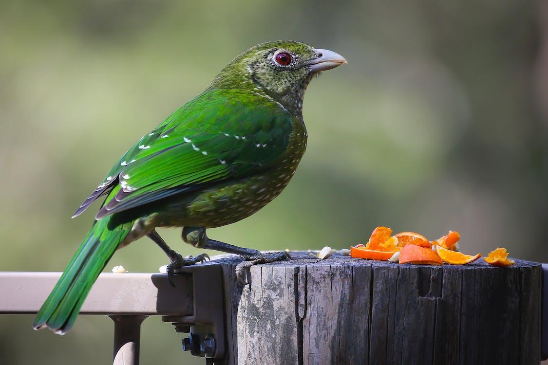 Green and Lime Bird on Gray Wood Log