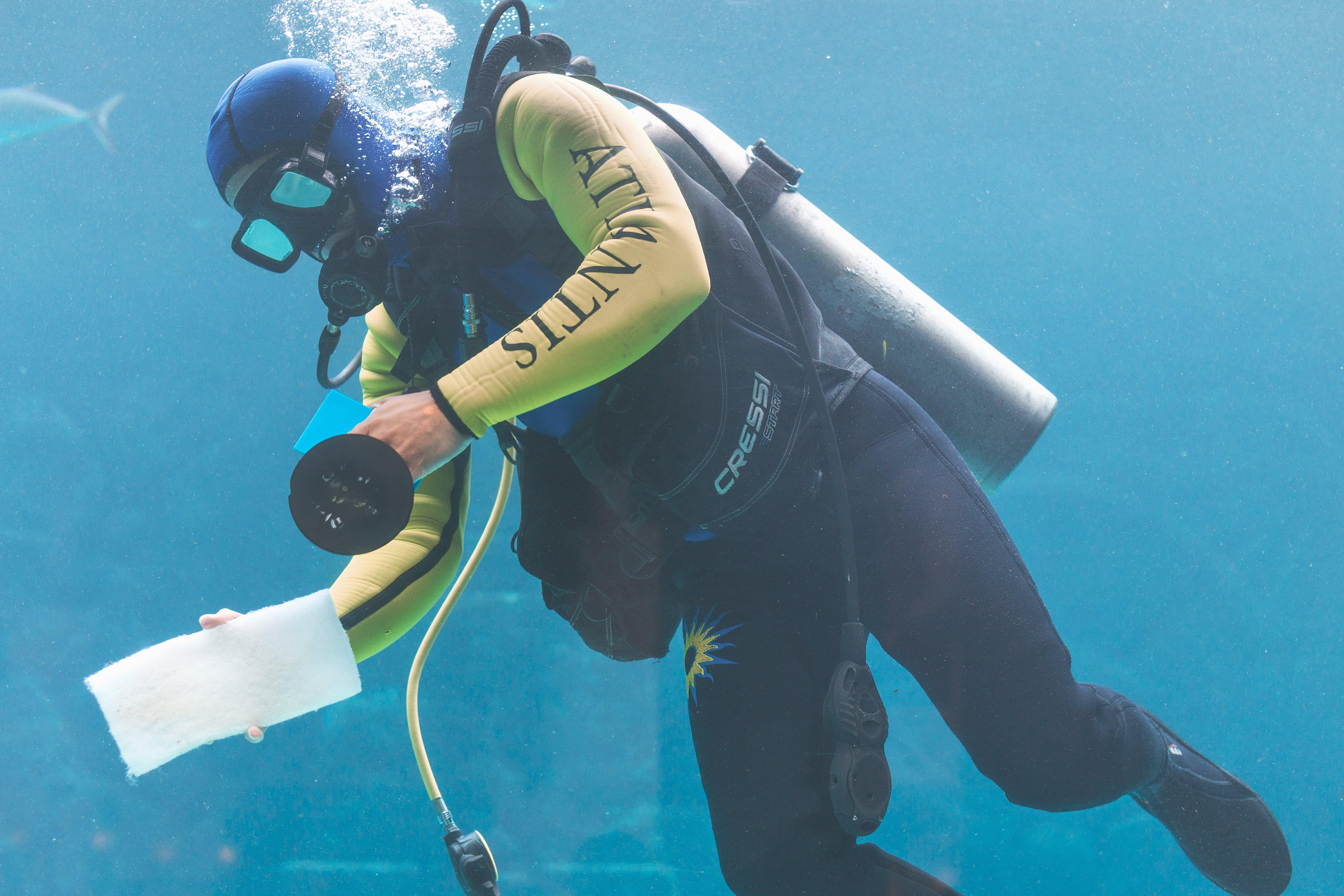 Free stock photo of aquarium, atlantis, bahamas resort, beach