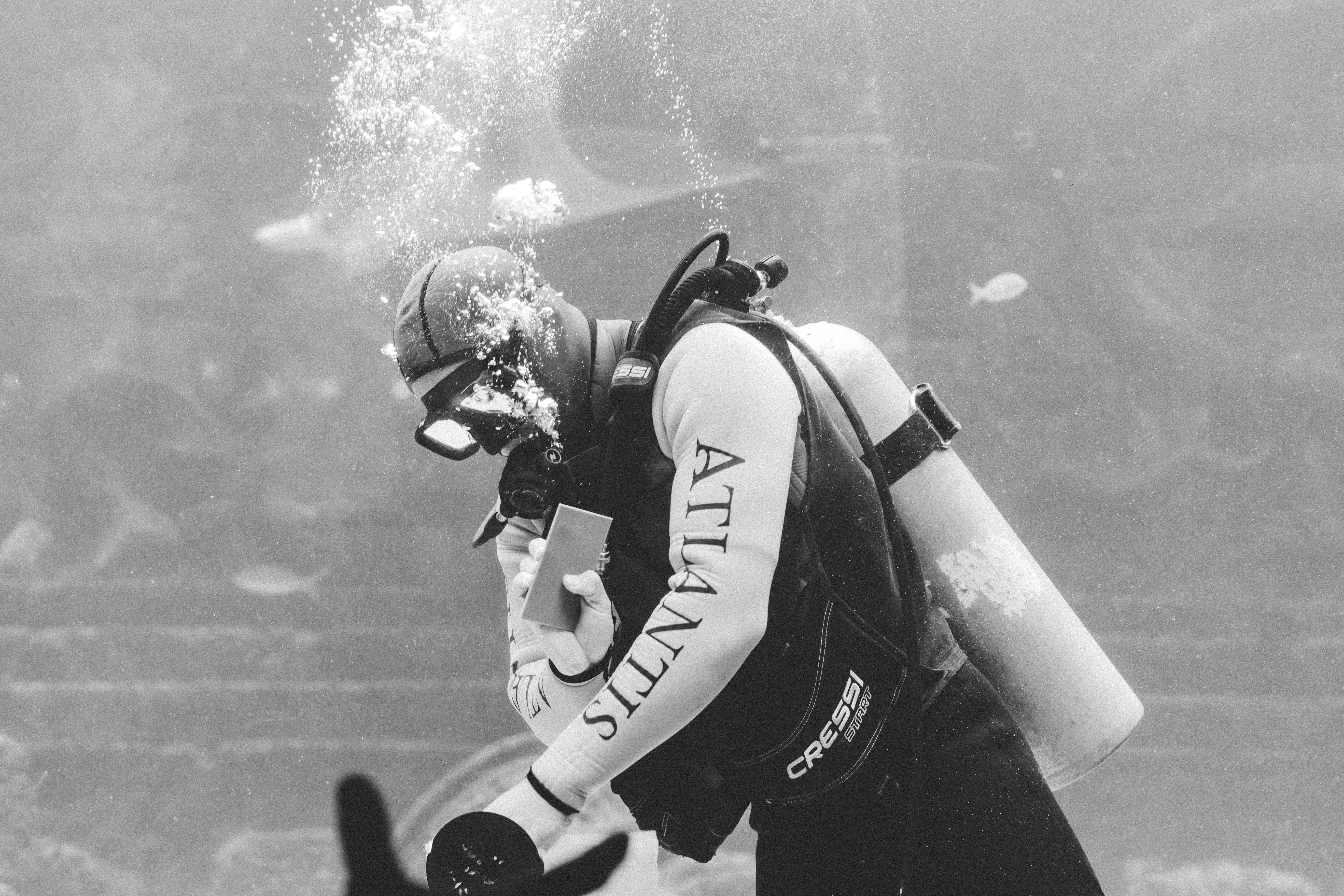 Kostenloses Stock Foto zu aquarium, atlantis, augen, ausstellungsstück