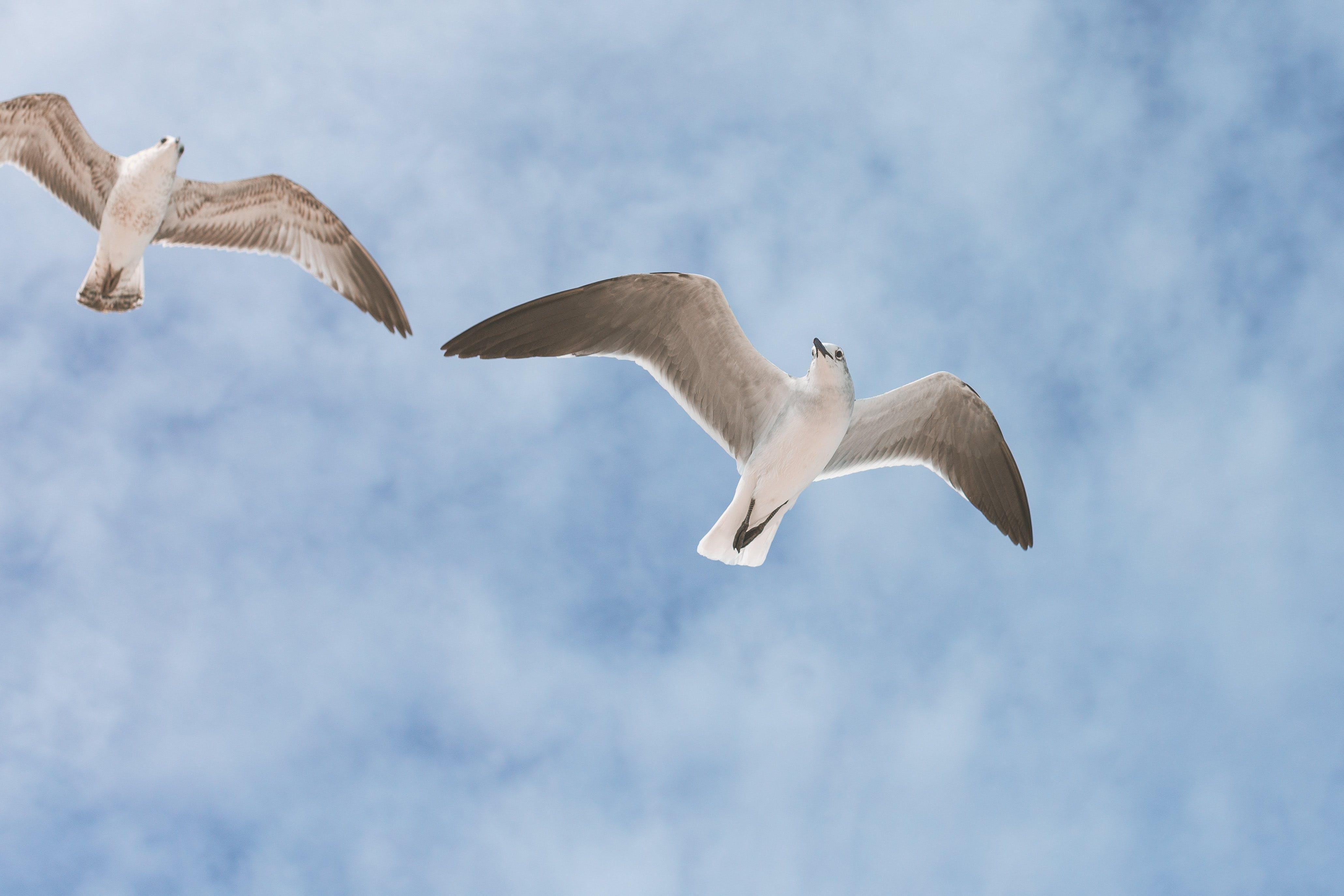 Free stock photo of Bahamas, beach, beautiful, birds