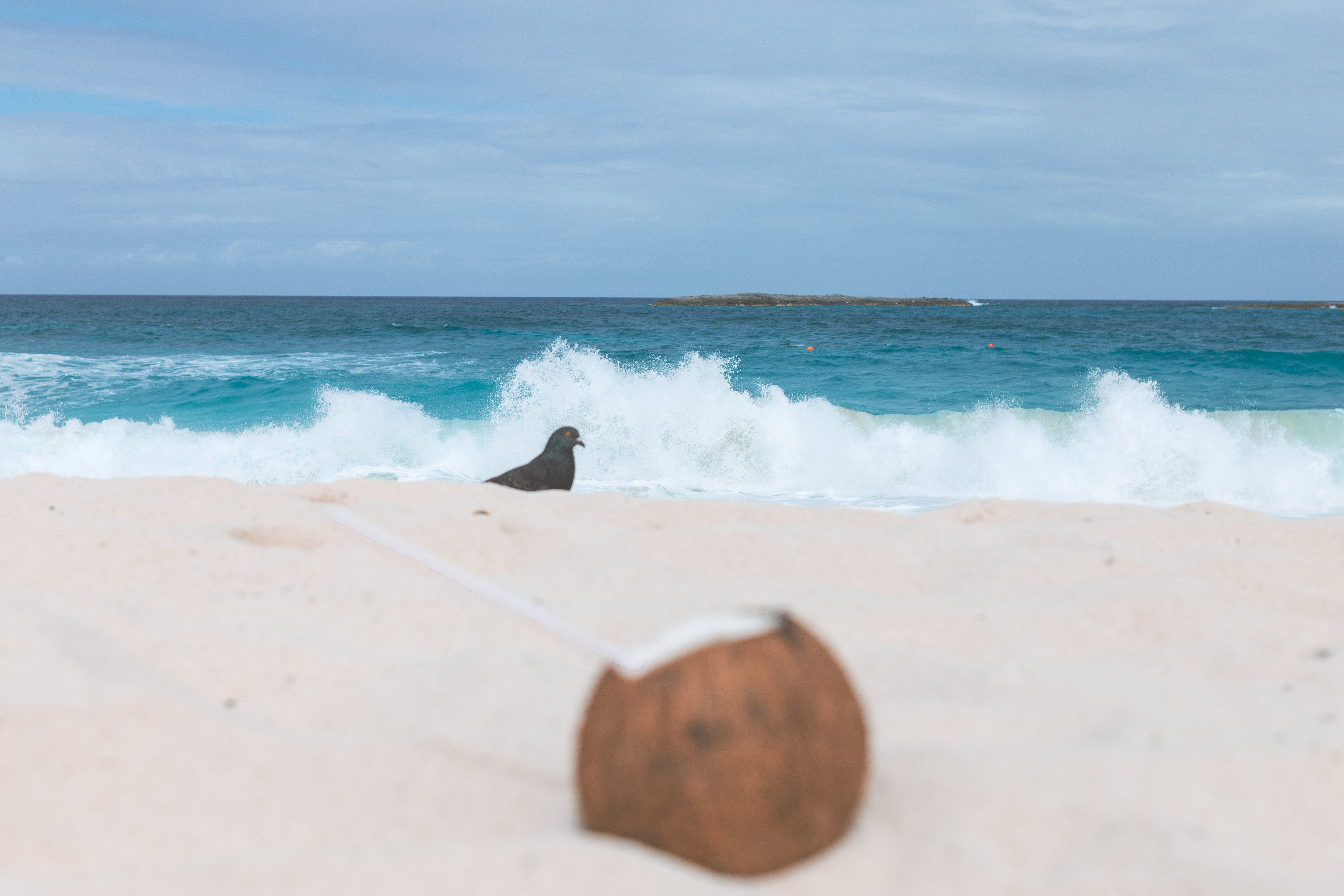 Free stock photo of alcoholic beverage, Bahamas, beach, beach bum