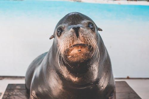 凝視, 動物, 動物攝影, 哺乳動物 的 免費圖庫相片