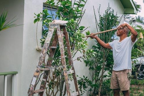 Kostnadsfri bild av anläggning, asiatisk man, bakgård, dagsljus