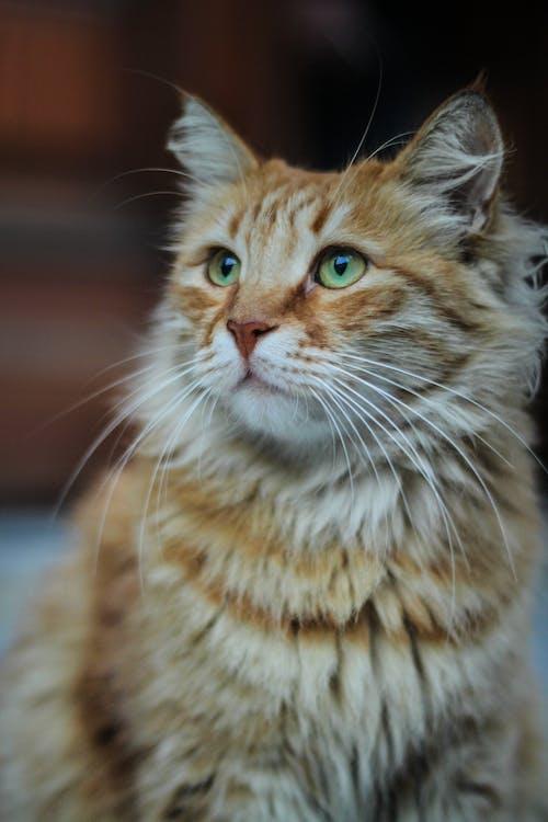 Free stock photo of #animals #cat #cute #travel #photo