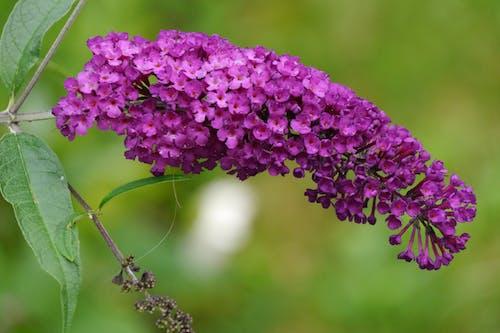 Kostnadsfri bild av blomma, suddig bakgrund