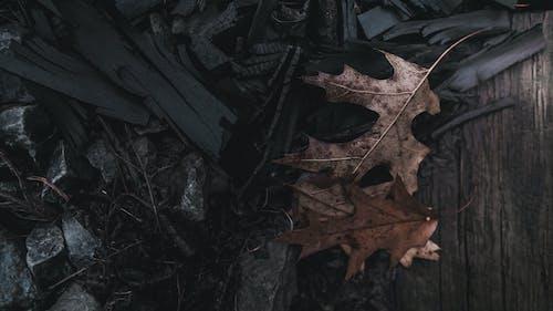 คลังภาพถ่ายฟรี ของ มืด, รู้สึก, วอลล์เปเปอร์ 4k, เจ้าอารมณ์