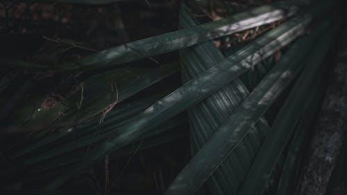 คลังภาพถ่ายฟรี ของ ธรรมชาติ, มืด, รู้สึก, วอลล์เปเปอร์ 4k