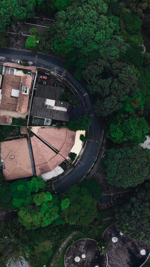 Imagine de stoc gratuită din acoperiș, arbori, arhitectură, asfalt