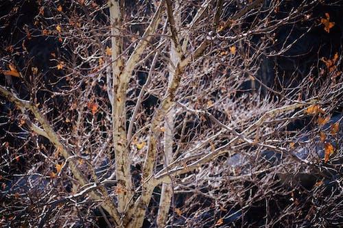 樹木 的 免费素材照片