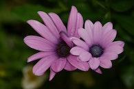 flowers, summer, purple