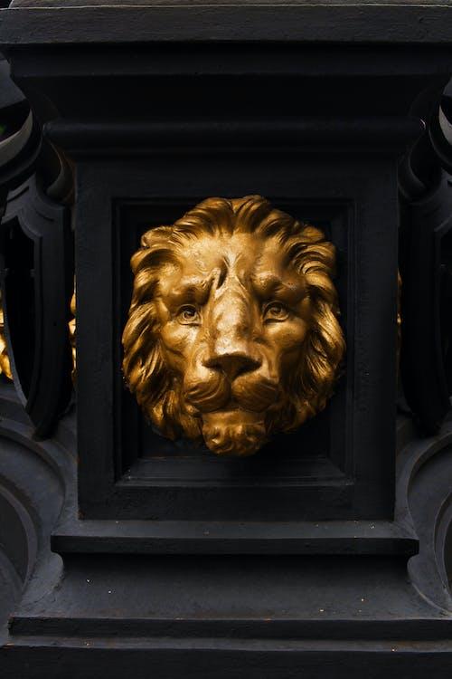 Fotos de stock gratuitas de amante de los animales, arte callejero, fotografías, león