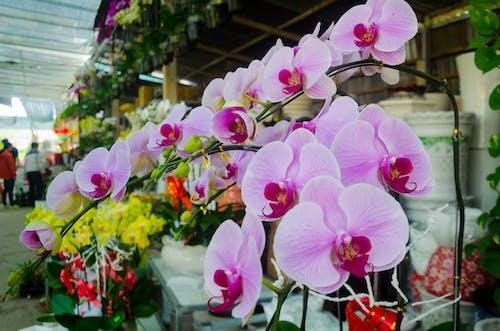 Darmowe zdjęcie z galerii z fotografia makro, kwiat, piękno natury, piękny kwiat
