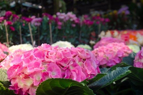 Darmowe zdjęcie z galerii z kolorowy obraz, kwiat, piękno natury, piękny kwiat