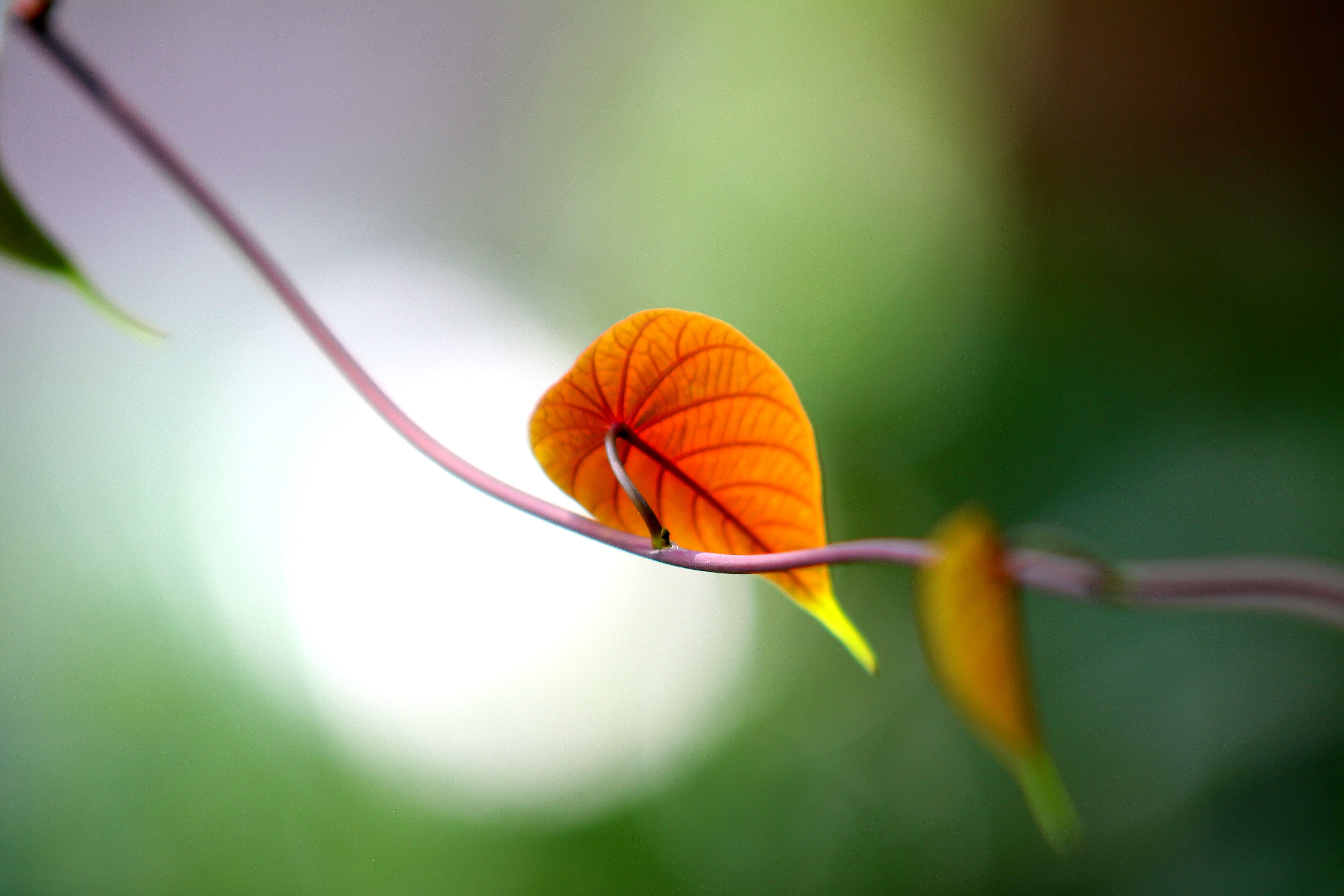 Shallow Depth of Field Photography of Brown Leaf