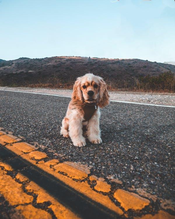 강아지, 개, 야외의 무료 스톡 사진