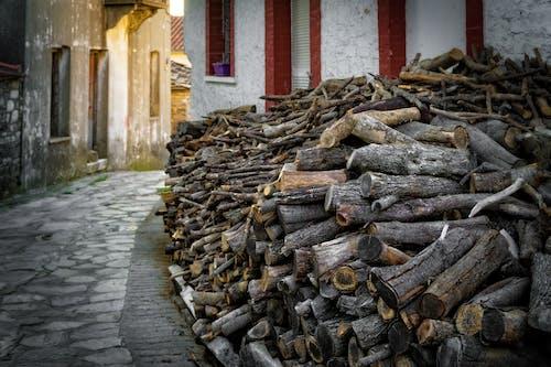 Immagine gratuita di alberi, cemento, corteccia di albero, esterno