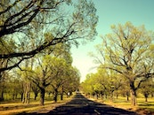 road, trees, spring