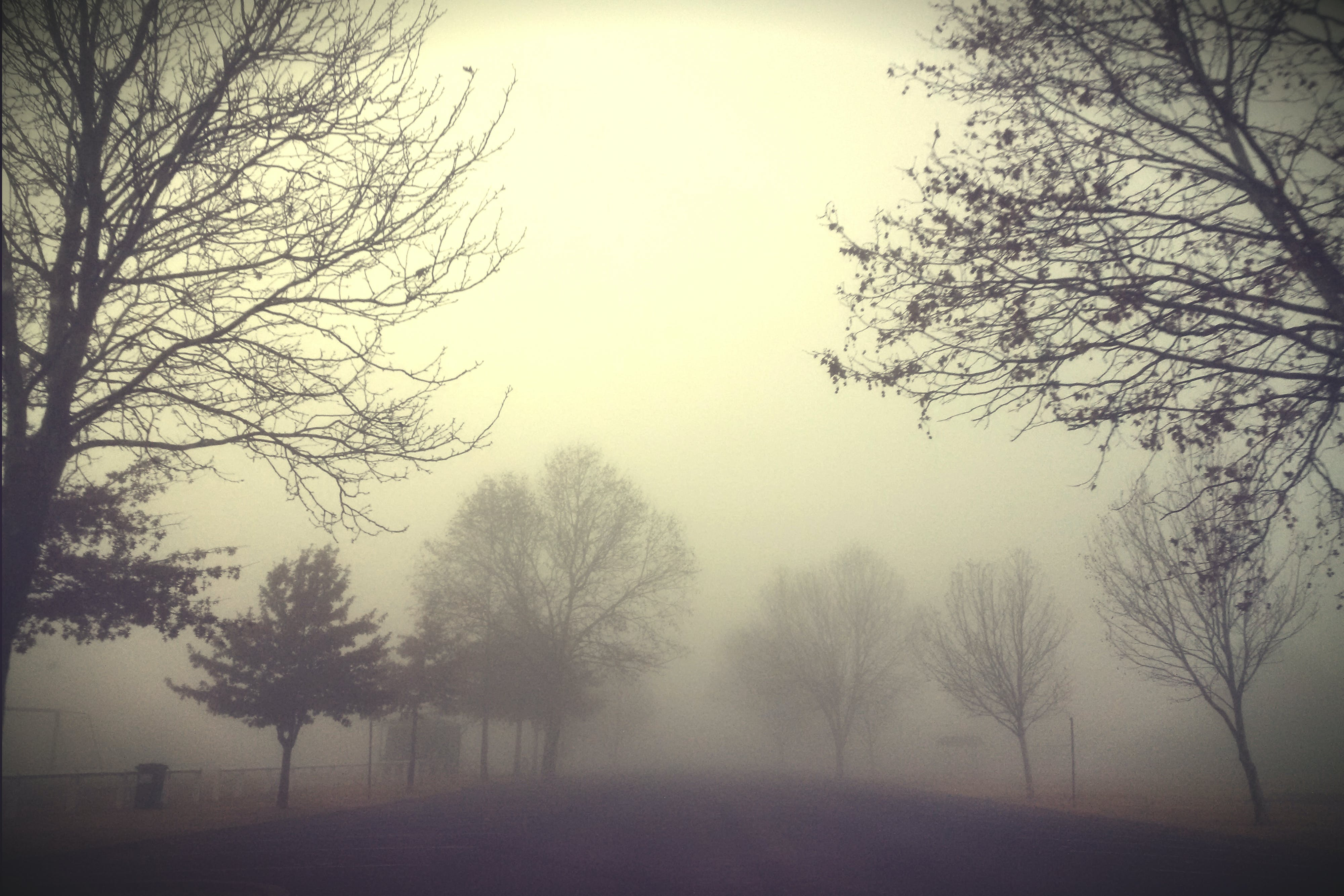 Free stock photo of early morning fog, trees, winter