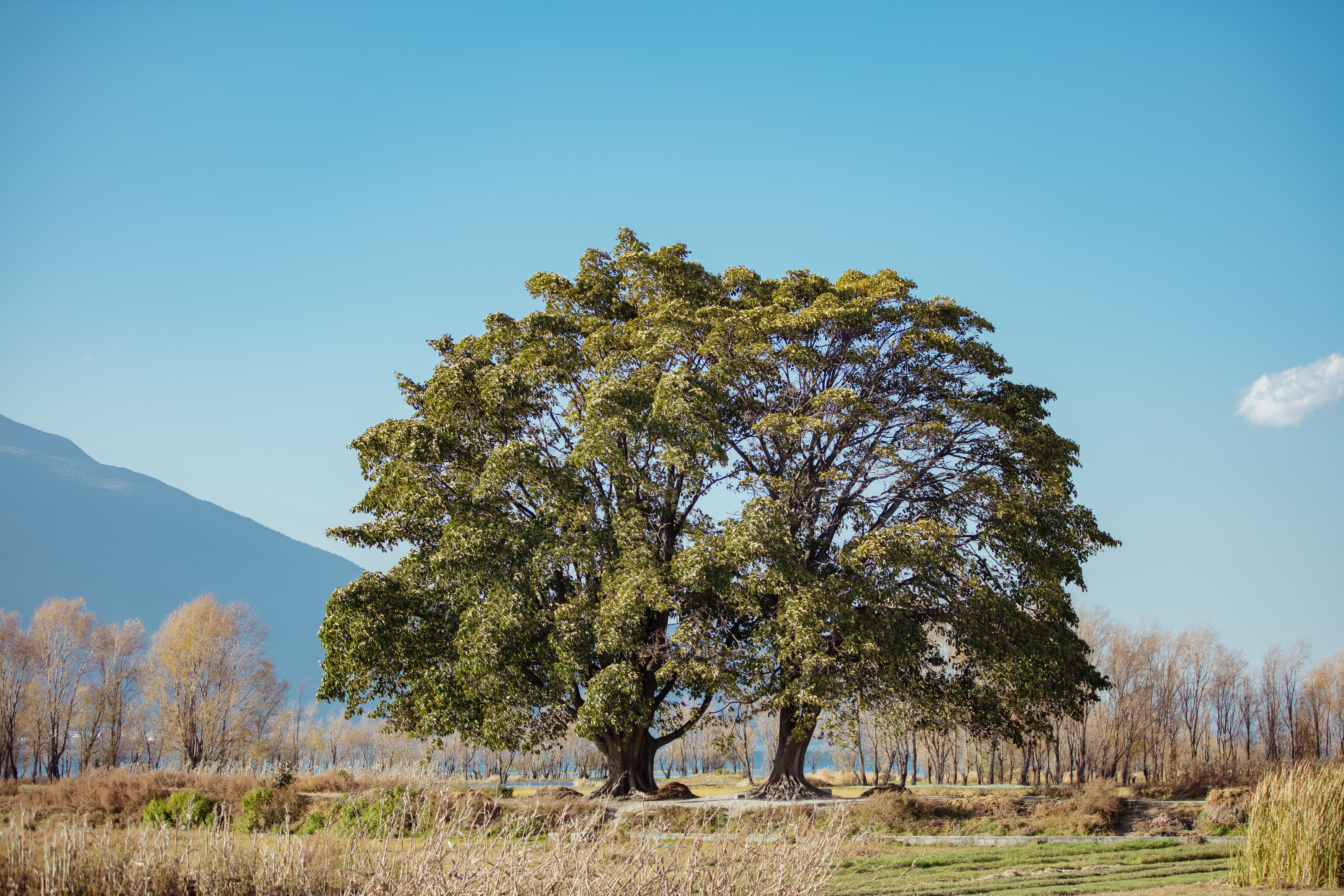 Green Leaf Trees in a Distant of Mountain Under Clear Blue Sky