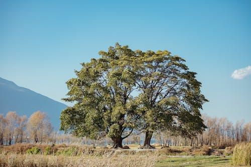 湛藍的天空下遙遠的山綠葉樹