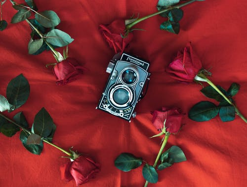 Free stock photo of flexarel, old camera, red roses