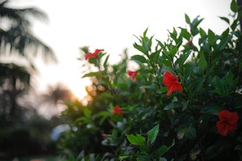 Kostenloses Stock Foto zu abendsonne, goldene sonne, schöne blume