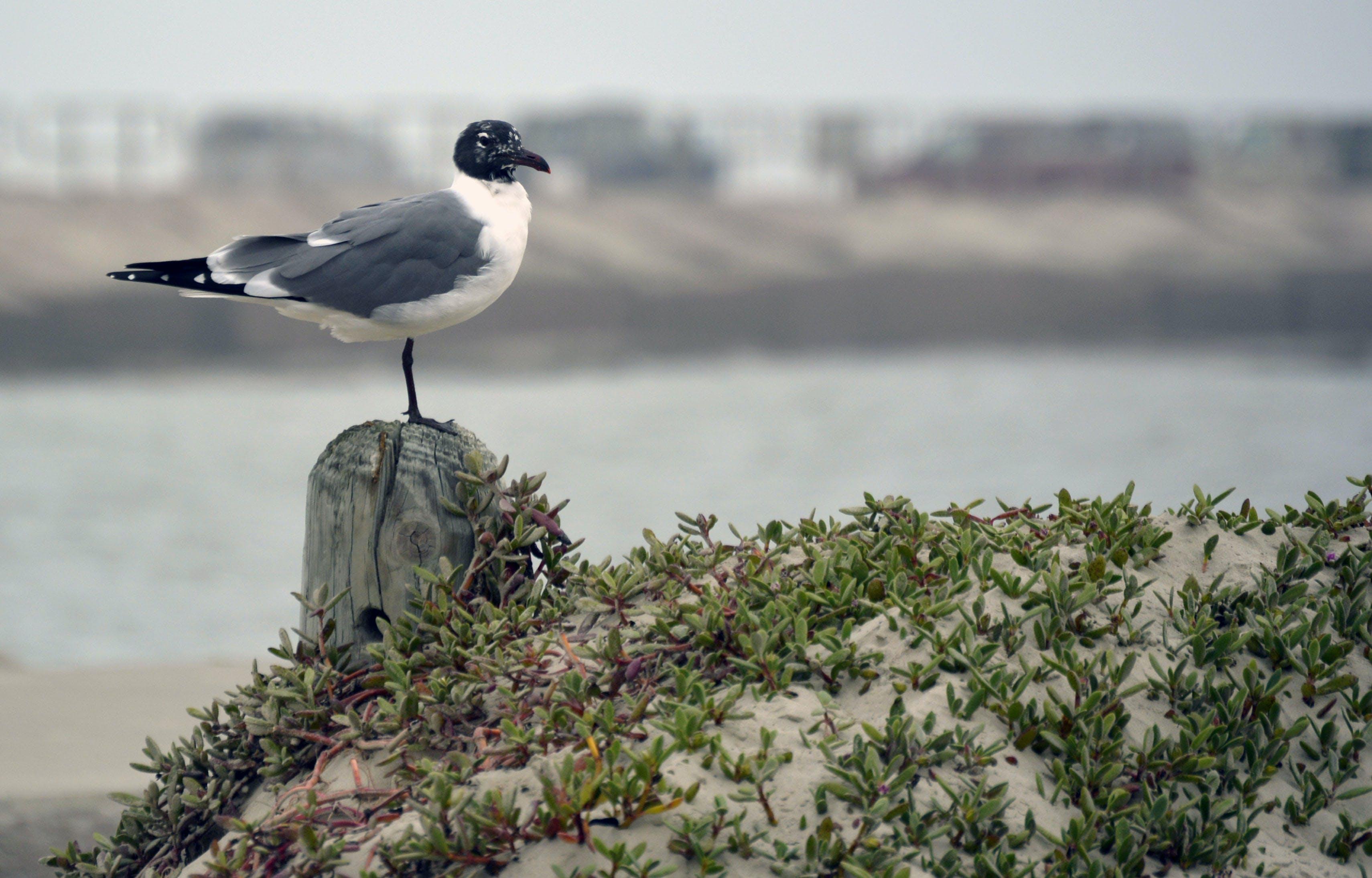 Free stock photo of beach, birding, birdwatching, ocean
