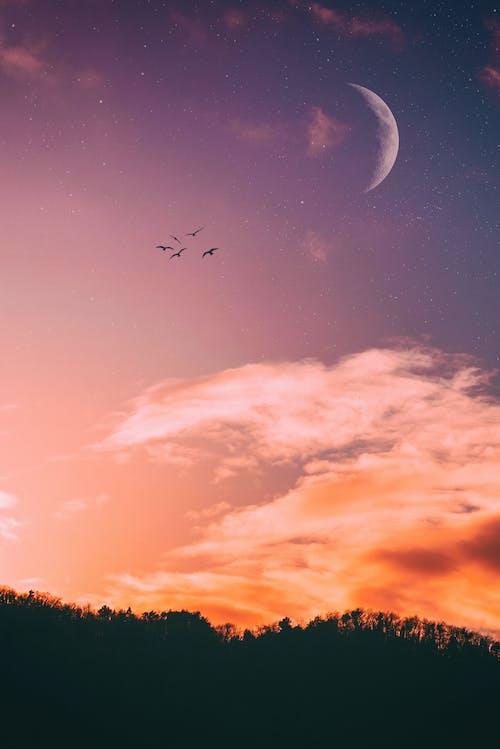 Foto stok gratis alam, awan, bagus, bangsa burung