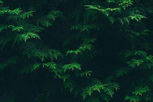 1000 great green photos pexels free stock photos - Pine tree wallpaper iphone ...