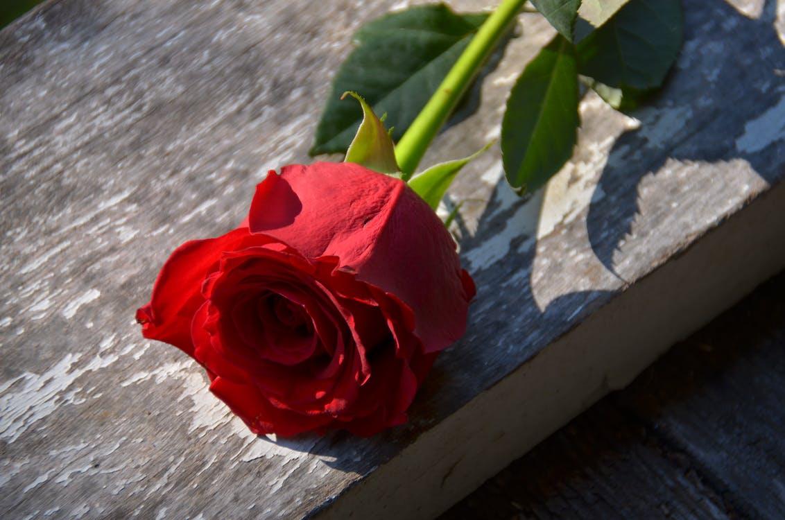 Rode roos, Valentijnsdag