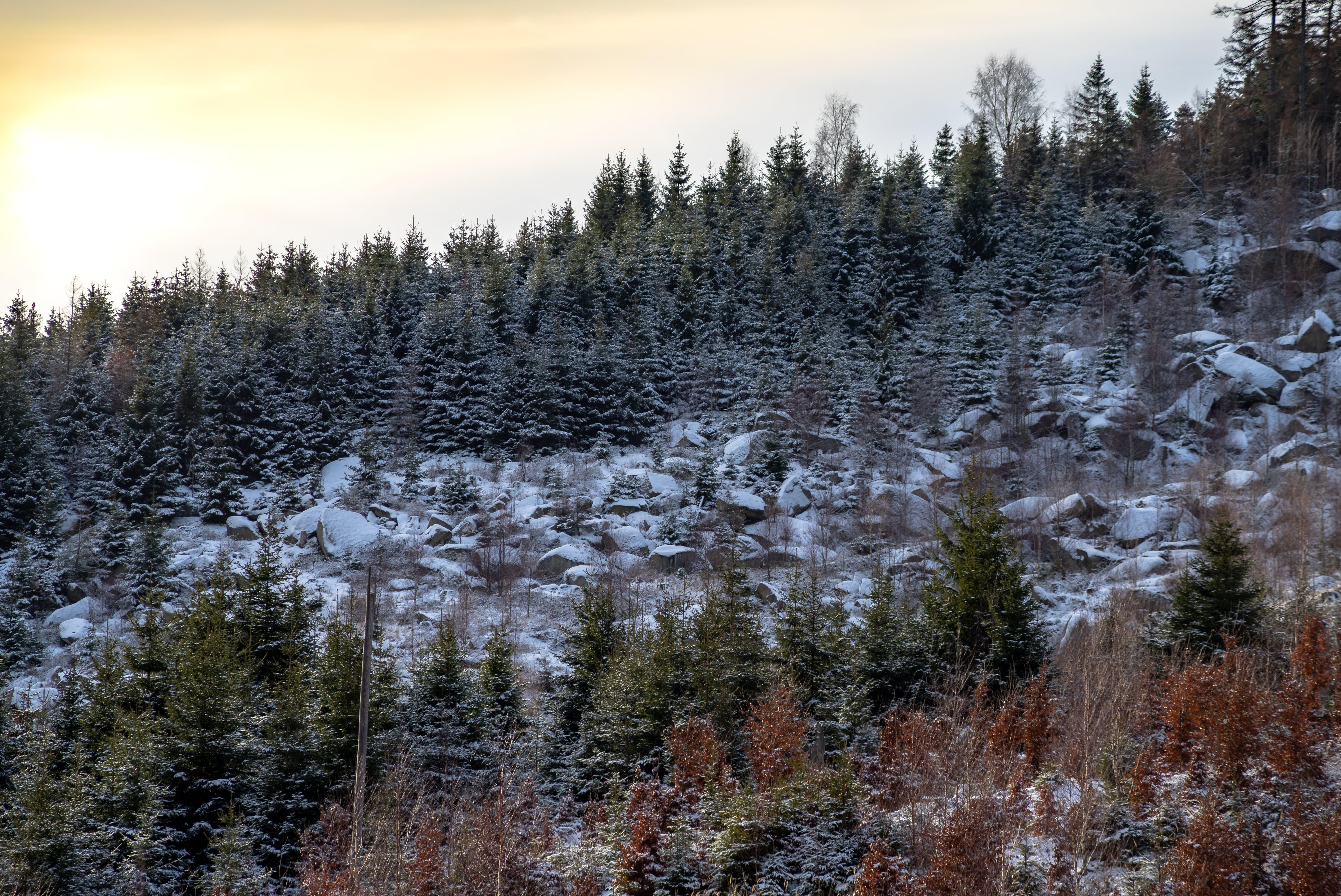 Gratis stockfoto met besneeuwde berg, bomen, kasseien, landschap