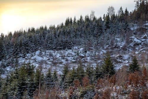 겨울, 겨울 풍경, 경치, 눈의 무료 스톡 사진