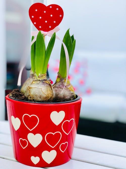 Ilmainen kuvapankkikuva tunnisteilla kasvit, kasvu, kattila, kaunis