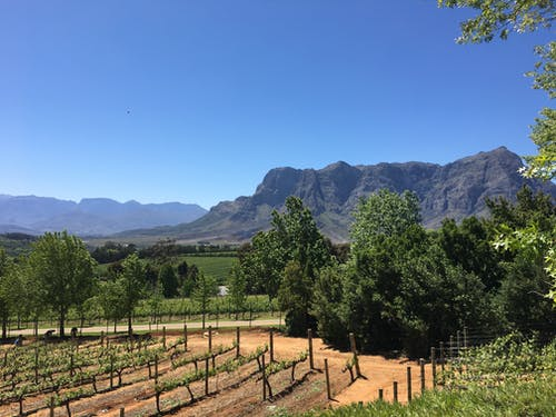 Foto stok gratis afrika selatan, gunung, kebun anggur, negara anggur