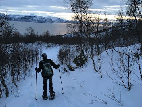 Foto stok gratis fjord, gunung bersalju, main ski, Norway