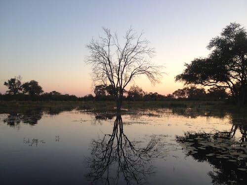 Foto stok gratis botswana, matahari terbenam, taman nasional chobe