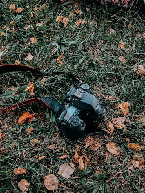 Gratis arkivbilde med bakken, digitalt kamera, digitalt speilreflekskamera, elektronikk