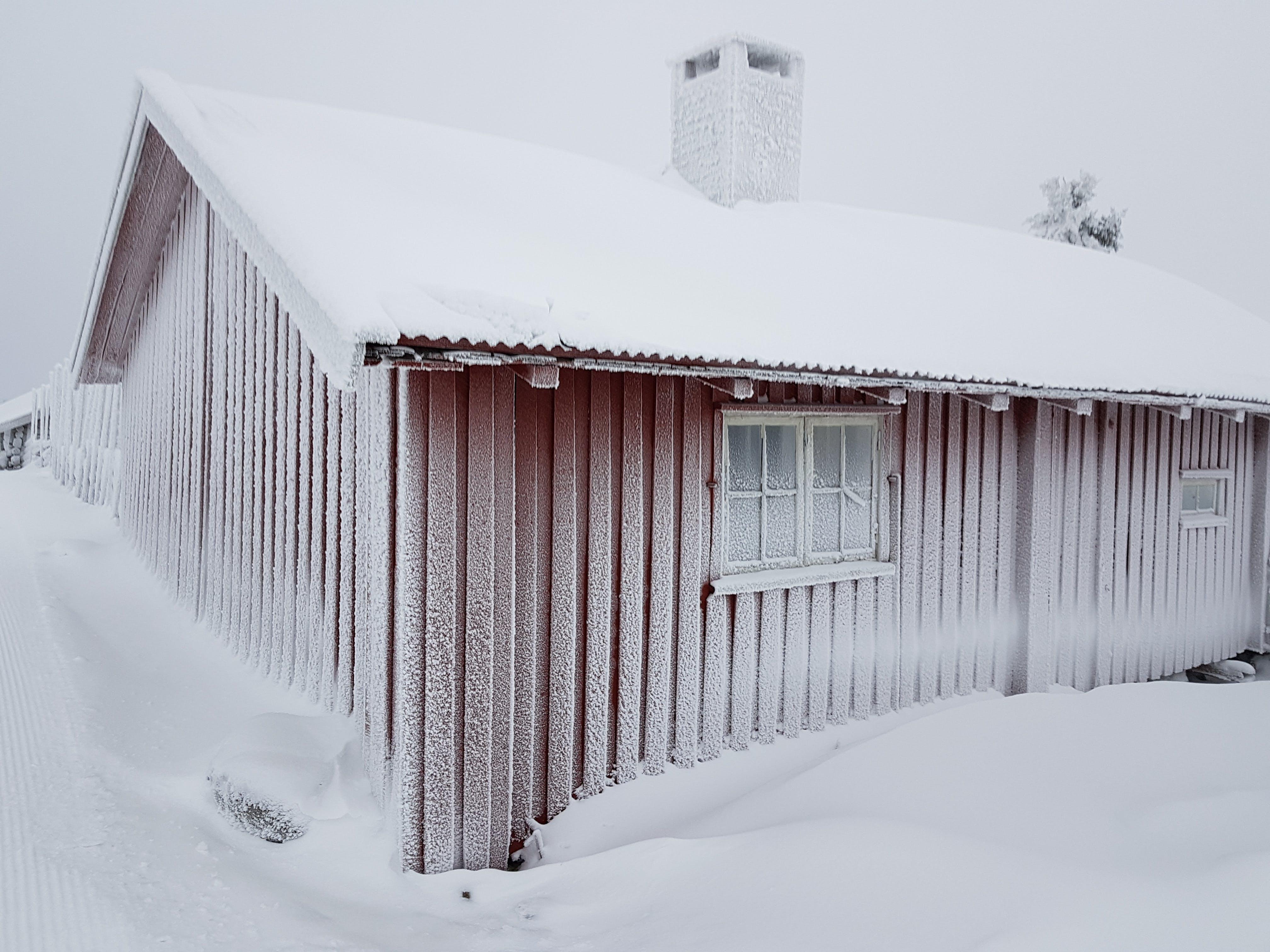 Foto d'estoc gratuïta de congelat, desembre, gebre, gel