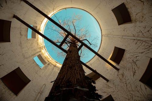 Darmowe zdjęcie z galerii z berlin, drzewo, miejsce, natura