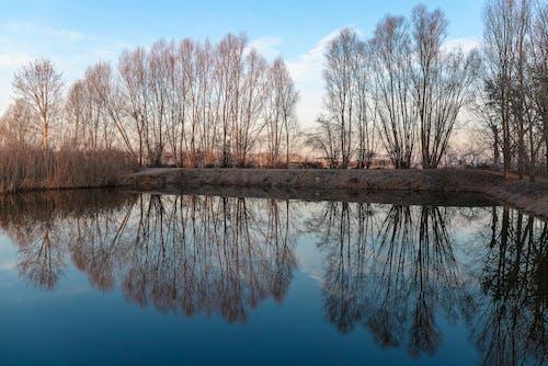 Бесплатное стоковое фото с отражения, природа
