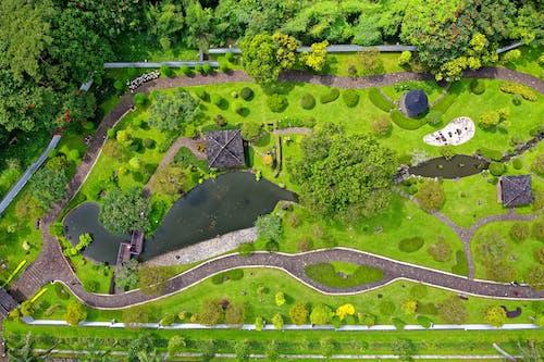 公園, 原本, 增長, 夏天 的 免費圖庫相片