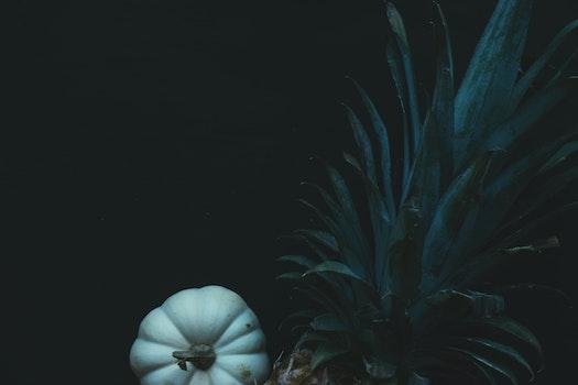 Free stock photo of food, harvest, autumn, pineapple
