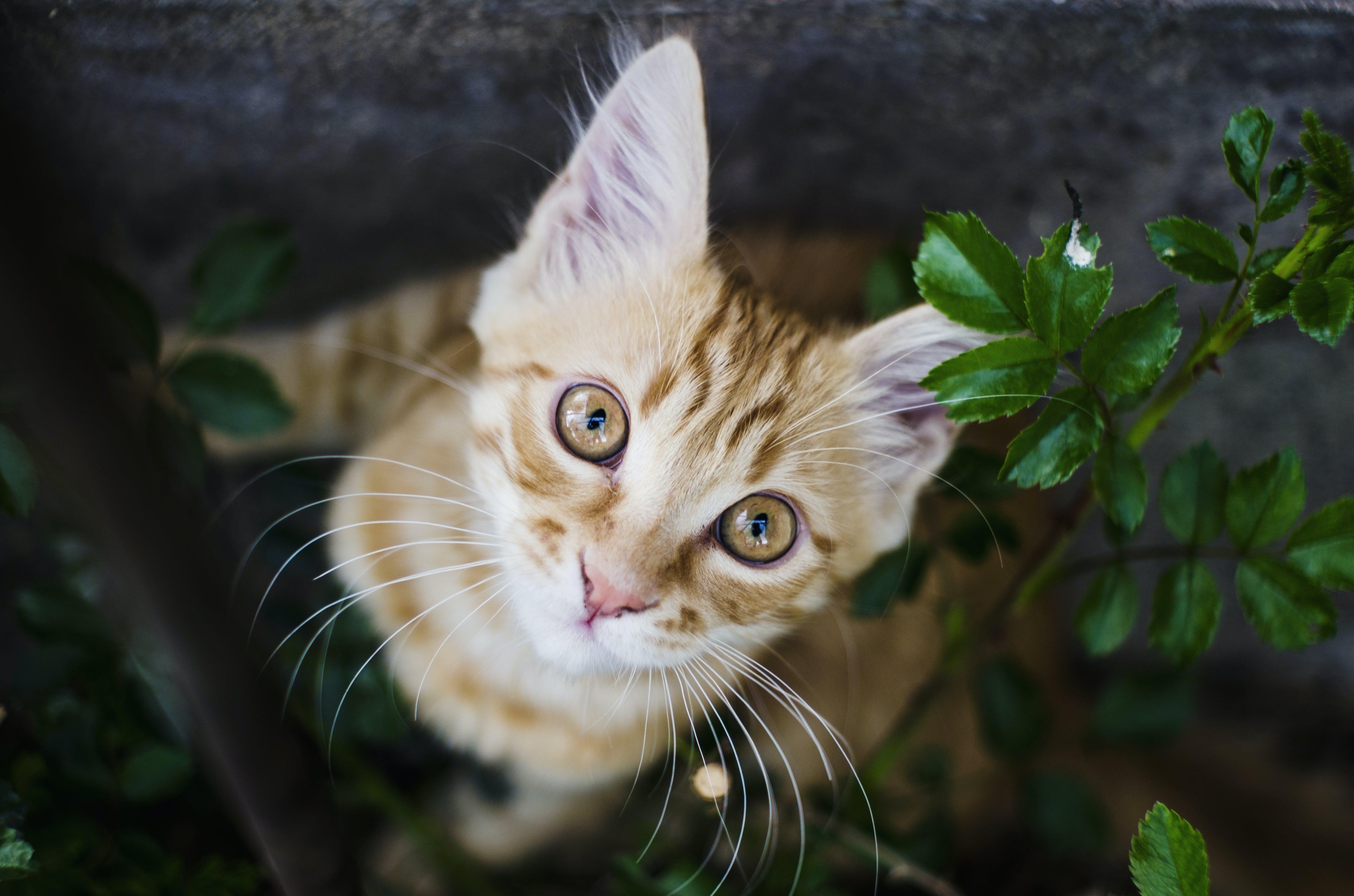 Free stock photo of animal, cat