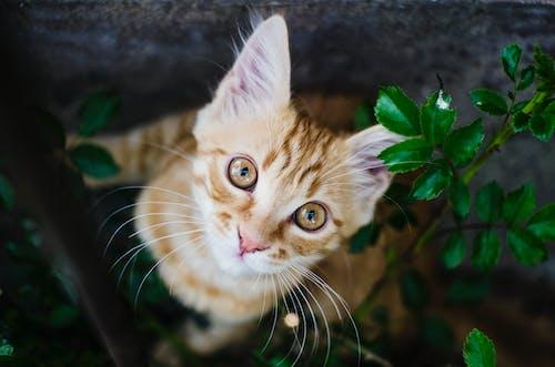 Gratis lagerfoto af dyr, kat