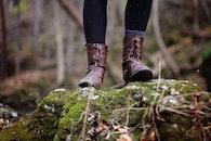 rocks, trees, moss